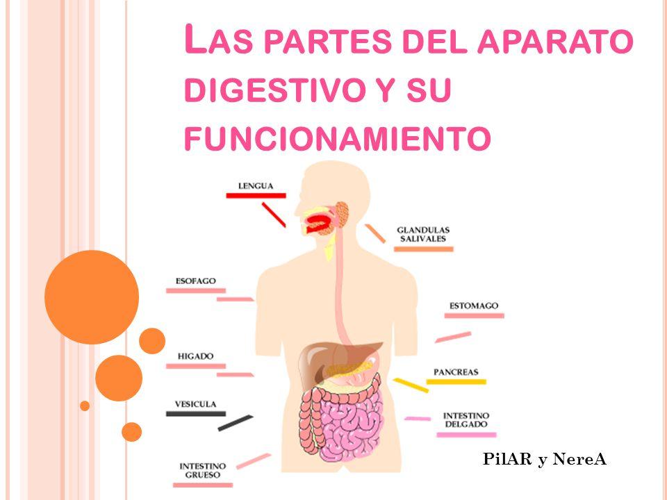 Las partes del aparato digestivo y su funcionamiento
