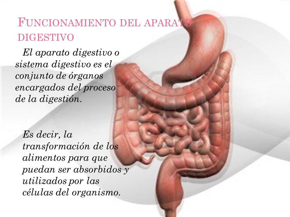 Funcionamiento del aparato digestivo