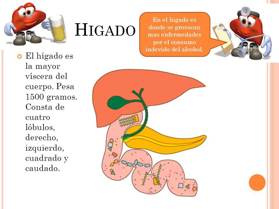 Higado En el higado es donde se provocan mas enfermedades por el consumo indevido del alcohol.