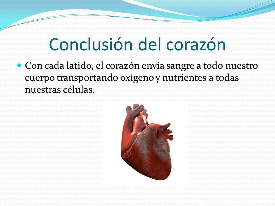 Conclusión del corazón