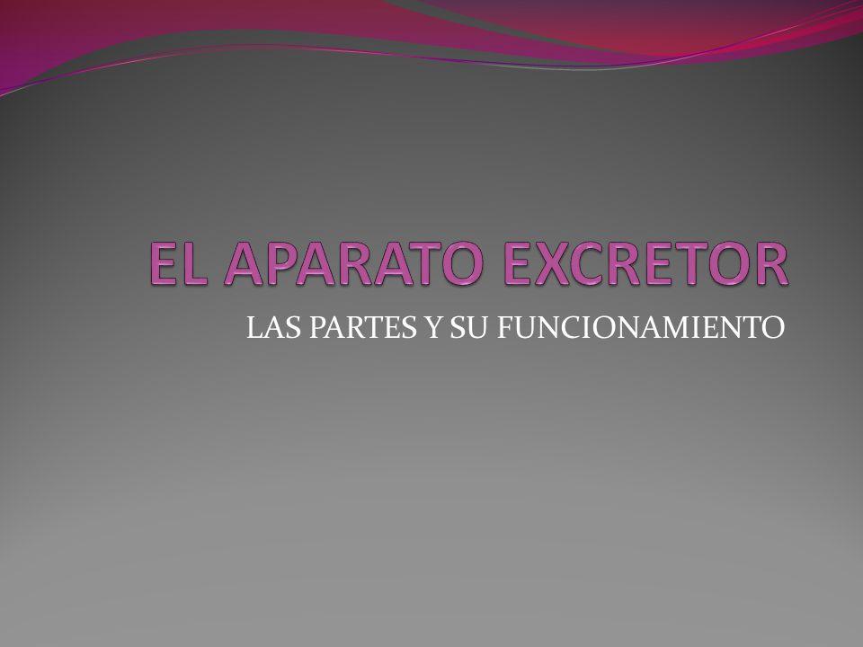 LAS PARTES Y SU FUNCIONAMIENTO