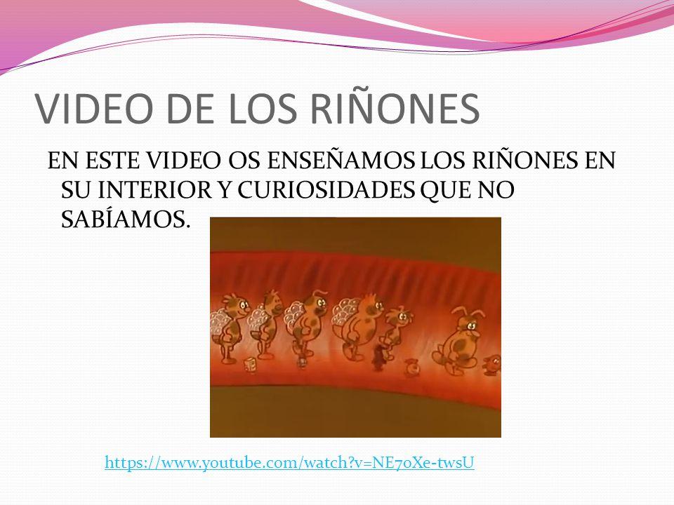 VIDEO DE LOS RIÑONES EN ESTE VIDEO OS ENSEÑAMOS LOS RIÑONES EN SU INTERIOR Y CURIOSIDADES QUE NO SABÍAMOS.