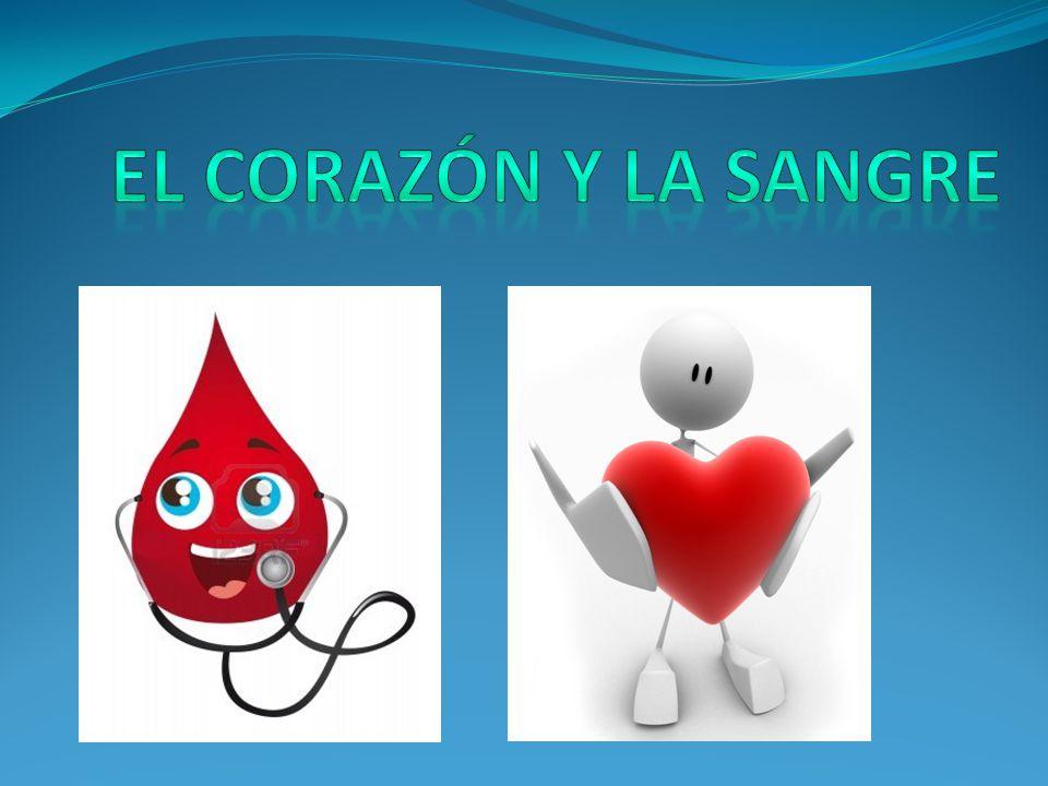 El corazón y la sangre