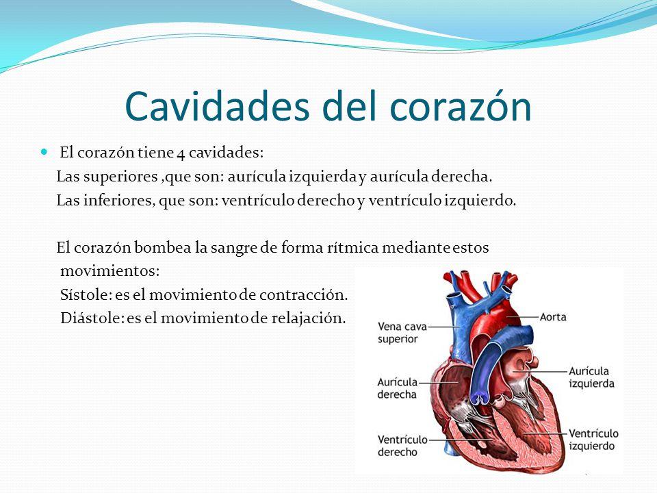 Cavidades del corazón El corazón tiene 4 cavidades: