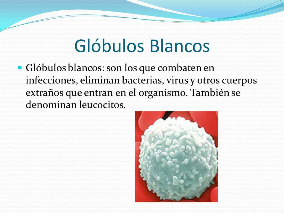 Glóbulos Blancos