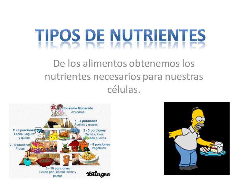 Tipos de nutrientes De los alimentos obtenemos los nutrientes necesarios para nuestras células.