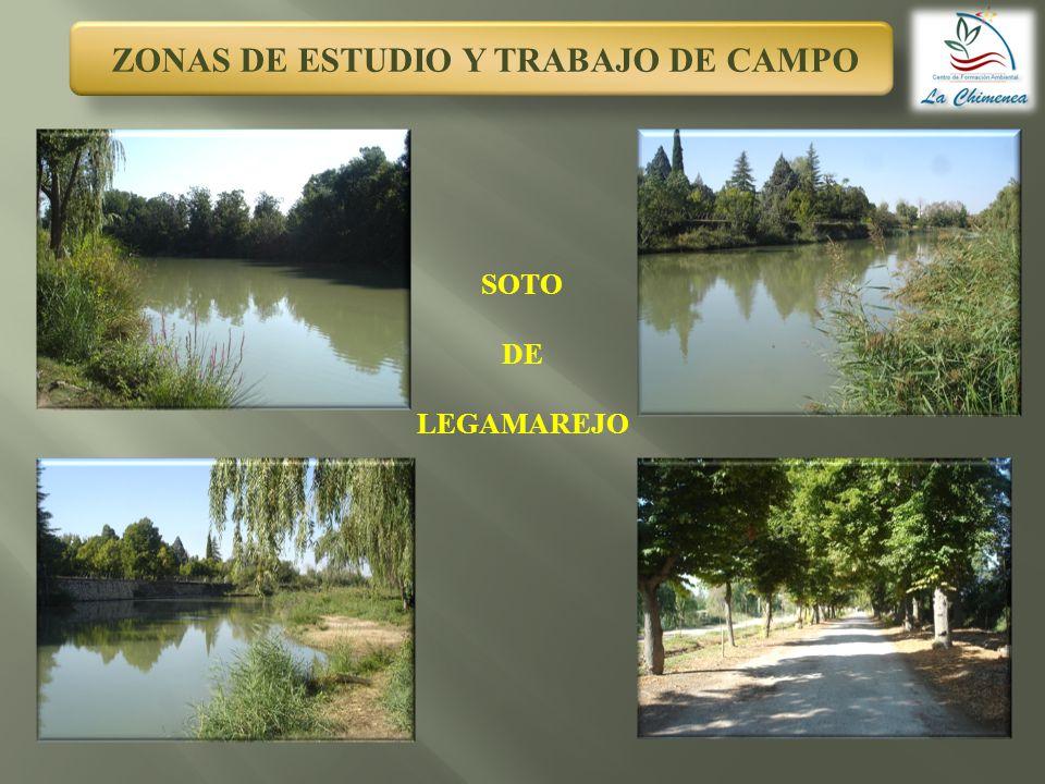 ZONAS DE ESTUDIO Y TRABAJO DE CAMPO