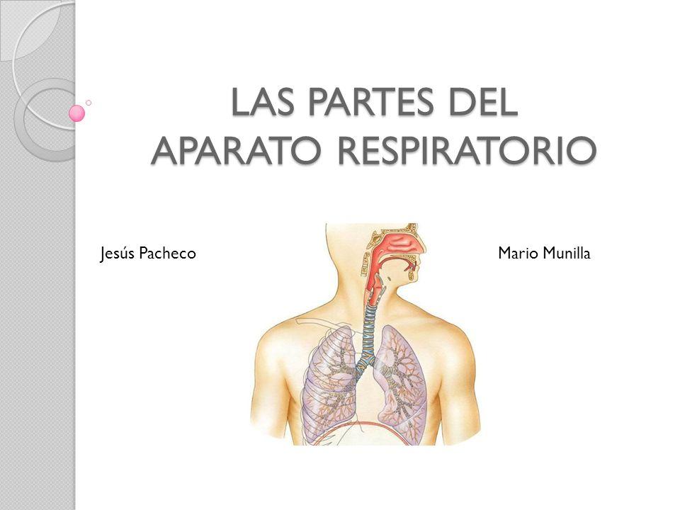 LAS PARTES DEL APARATO RESPIRATORIO