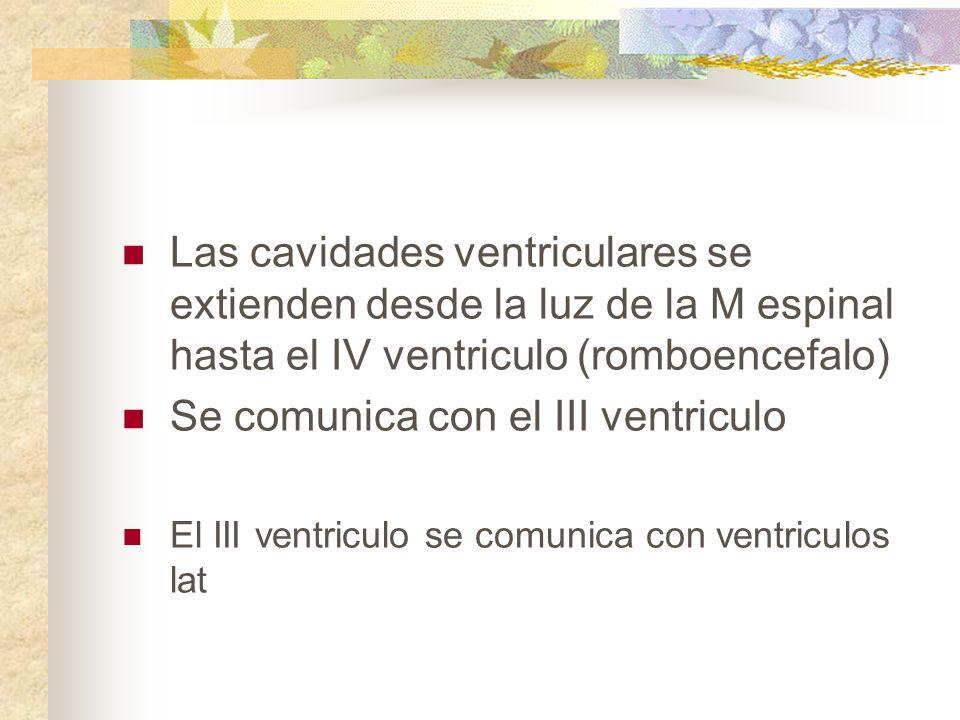 Se comunica con el III ventriculo