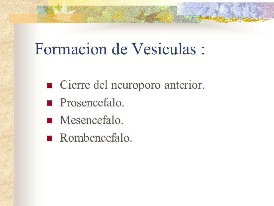 Formacion de Vesiculas :