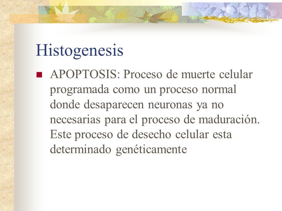 Histogenesis