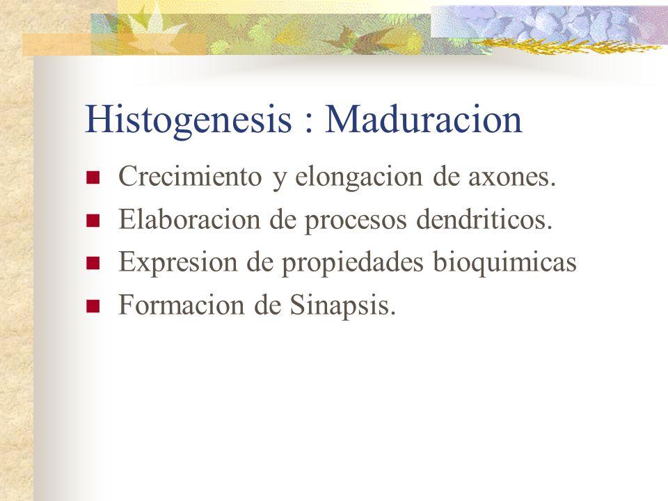 Histogenesis : Maduracion
