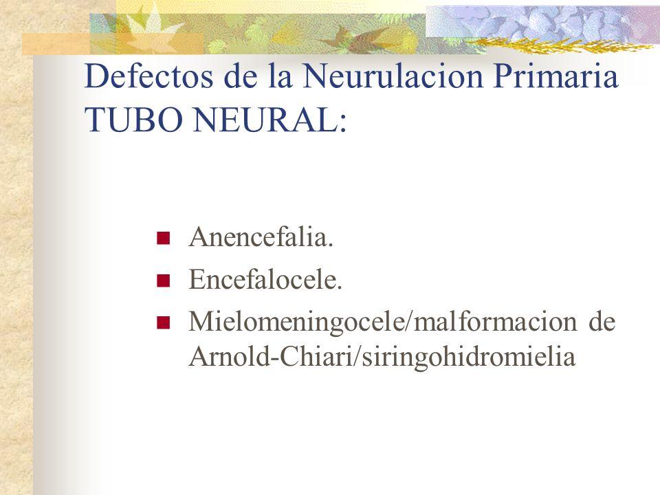 Defectos de la Neurulacion Primaria TUBO NEURAL: