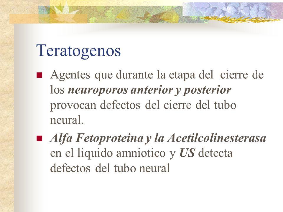 Teratogenos Agentes que durante la etapa del cierre de los neuroporos anterior y posterior provocan defectos del cierre del tubo neural.