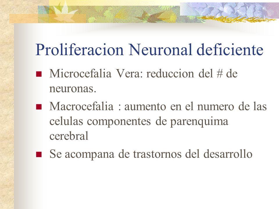 Proliferacion Neuronal deficiente
