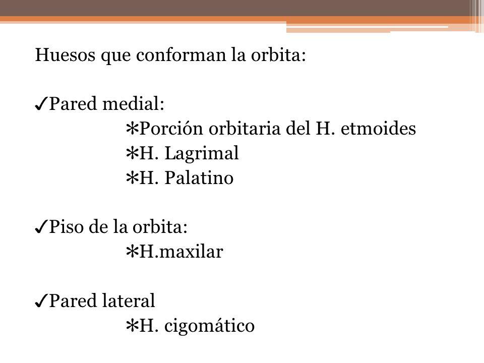 Huesos que conforman la orbita: ✓Pared medial: ✻Porción orbitaria del H.