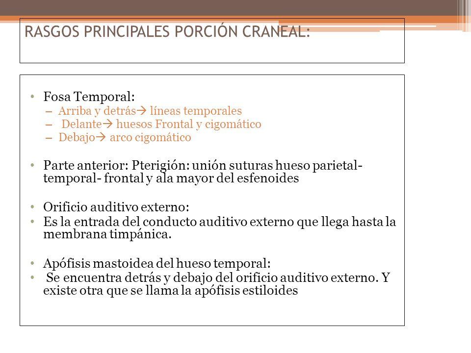 RASGOS PRINCIPALES PORCIÓN CRANEAL: