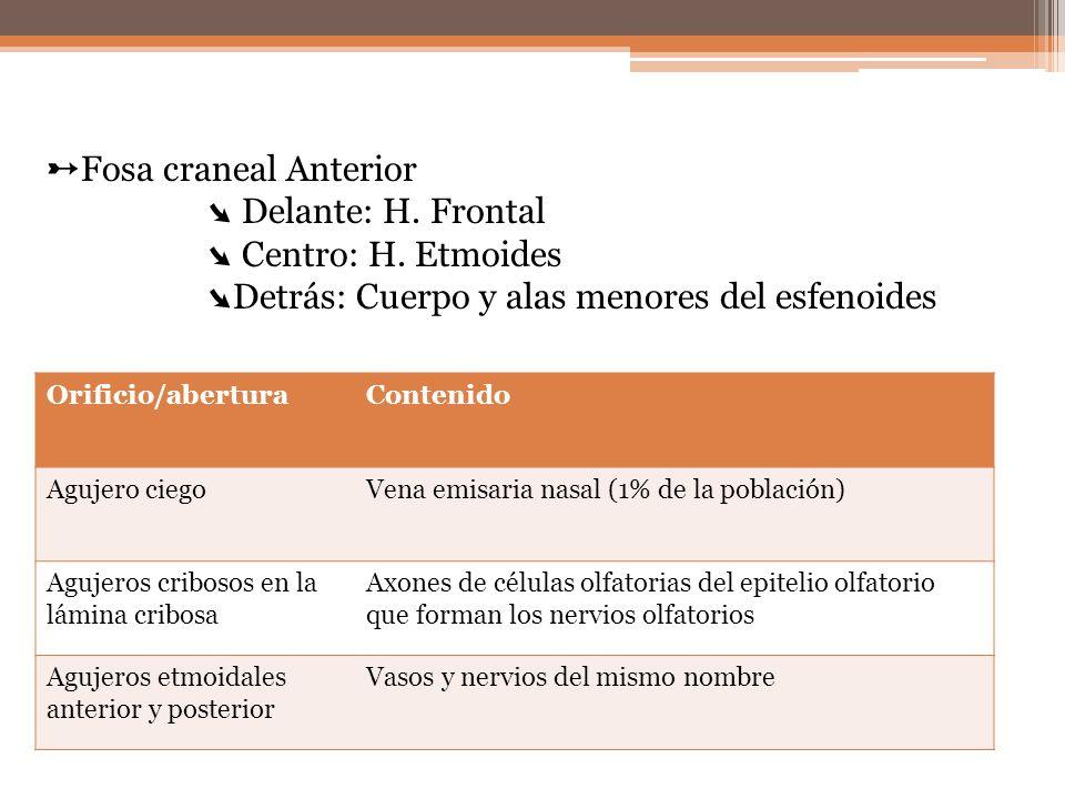 ➸Fosa craneal Anterior ➘ Delante: H. Frontal ➘ Centro: H. Etmoides