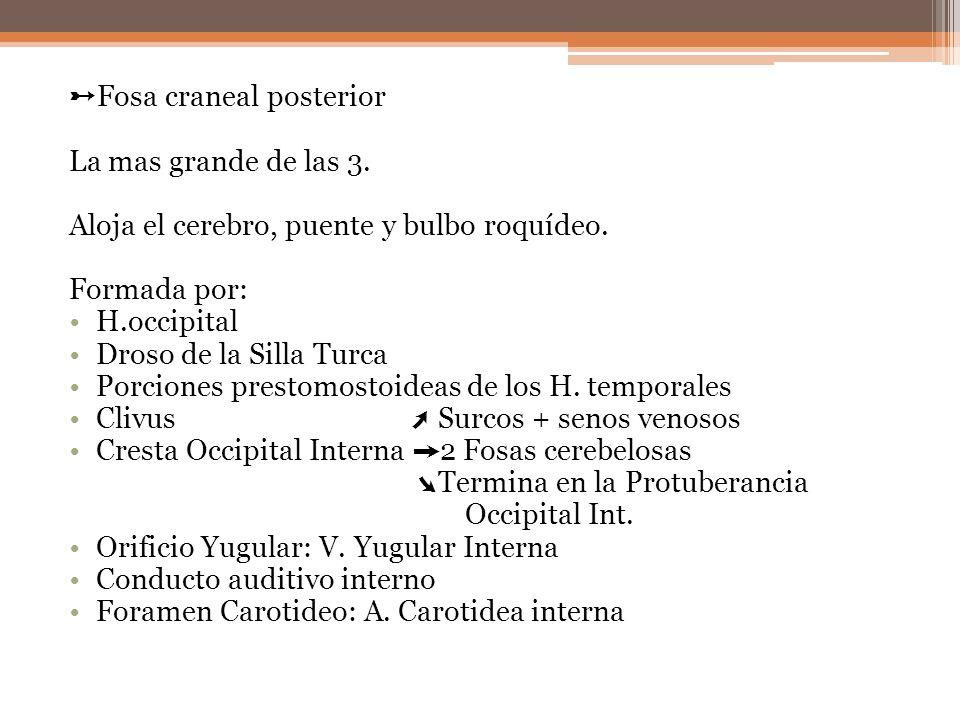 ➸Fosa craneal posterior