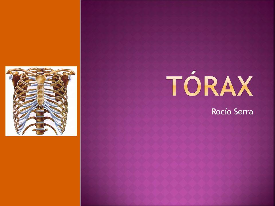 tórax Rocío Serra