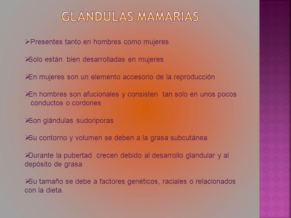 Glándulas mamarias Presentes tanto en hombres como mujeres