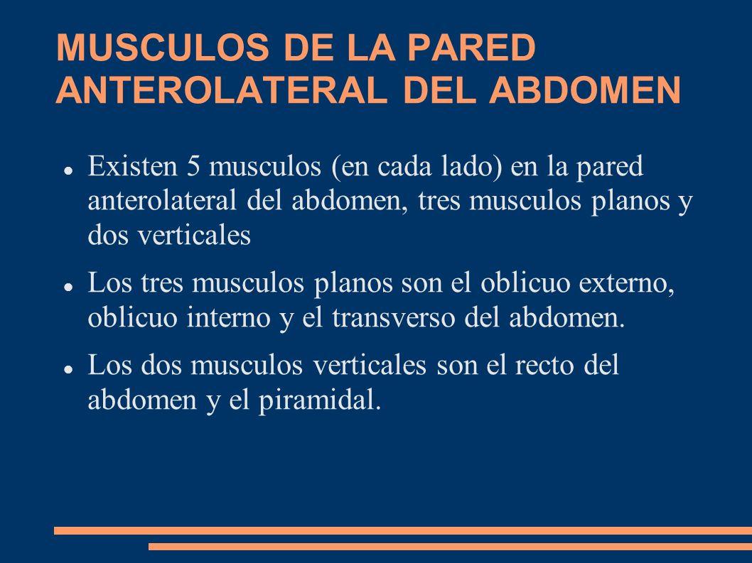MUSCULOS DE LA PARED ANTEROLATERAL DEL ABDOMEN