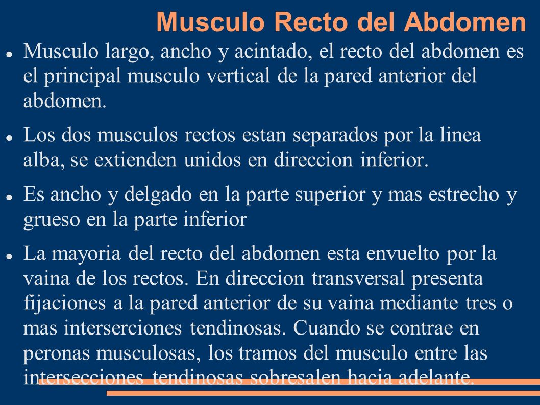 Musculo Recto del Abdomen