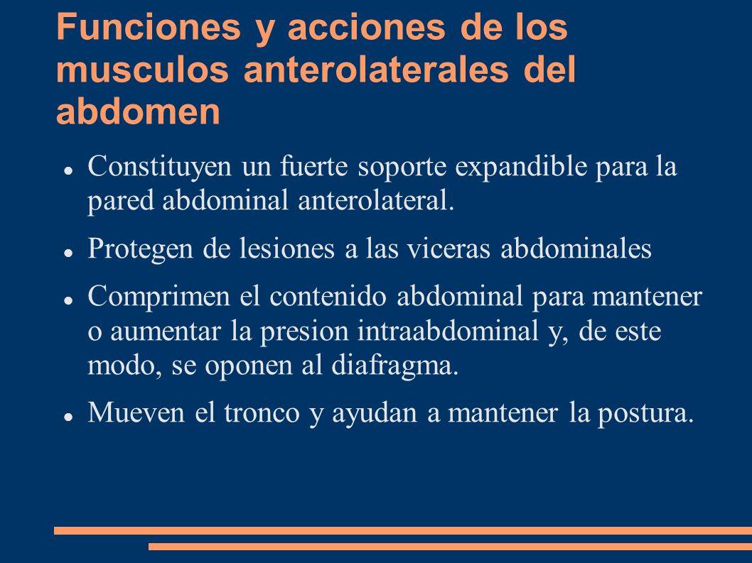 Funciones y acciones de los musculos anterolaterales del abdomen