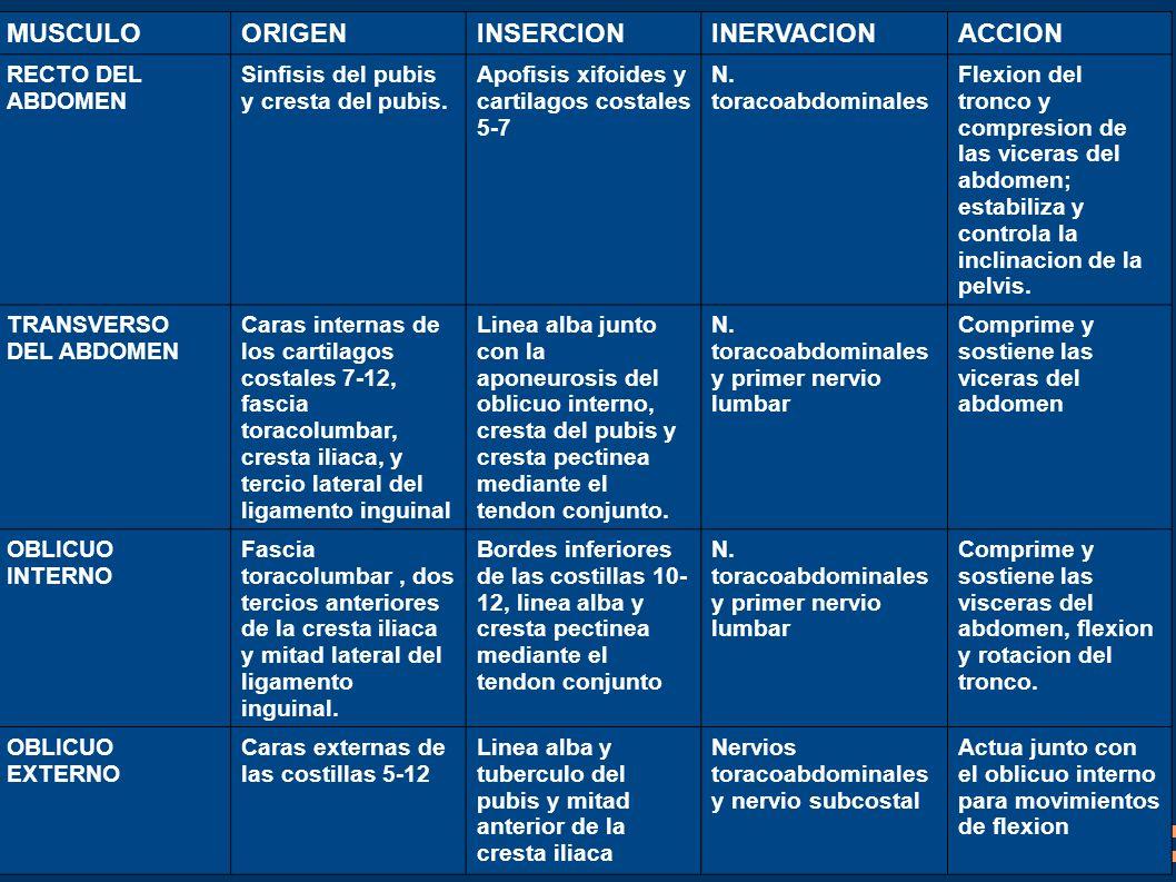 Lujo Tramo Recto Del Abdomen Imágenes - Anatomía de Las Imágenesdel ...