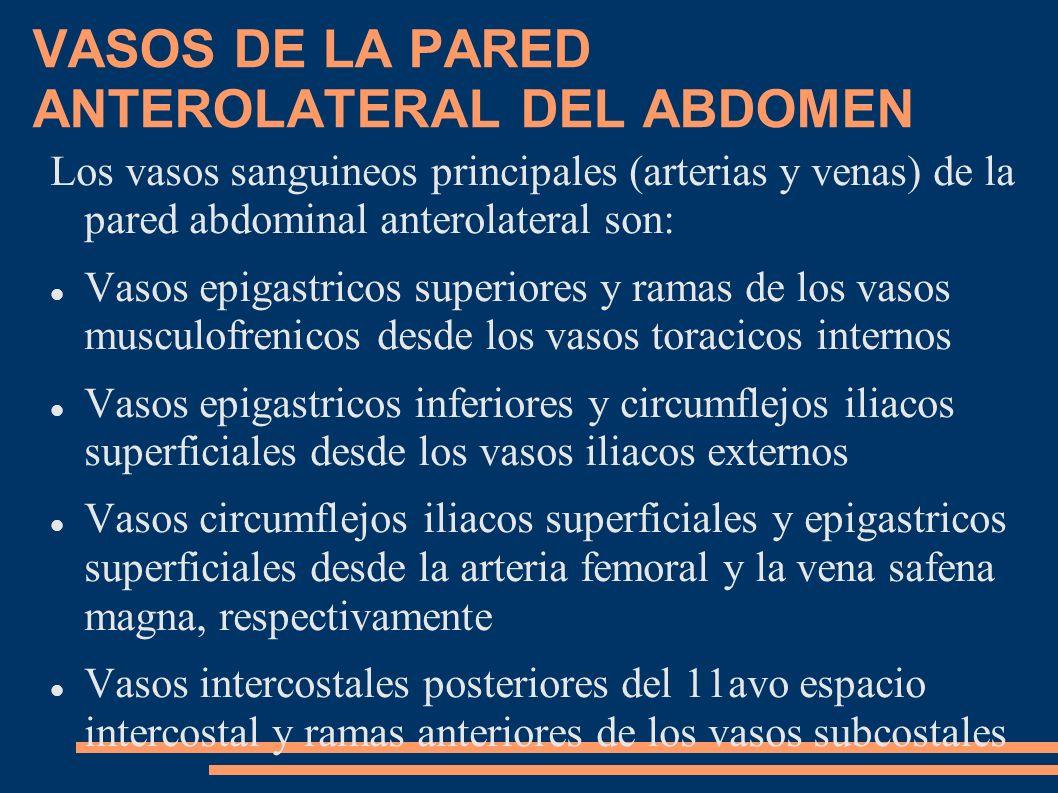 VASOS DE LA PARED ANTEROLATERAL DEL ABDOMEN
