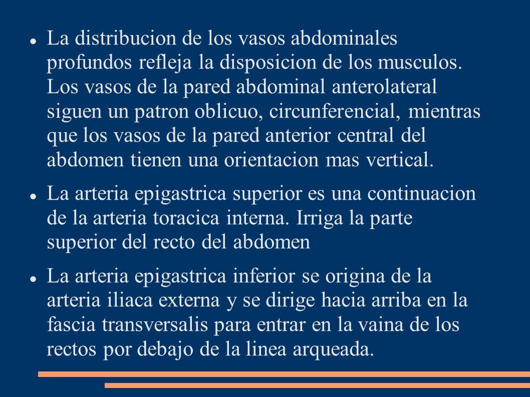 La distribucion de los vasos abdominales profundos refleja la disposicion de los musculos. Los vasos de la pared abdominal anterolateral siguen un patron oblicuo, circunferencial, mientras que los vasos de la pared anterior central del abdomen tienen una orientacion mas vertical.