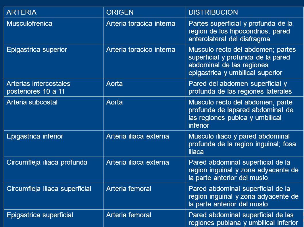ARTERIA ORIGEN. DISTRIBUCION. Musculofrenica. Arteria toracica interna.