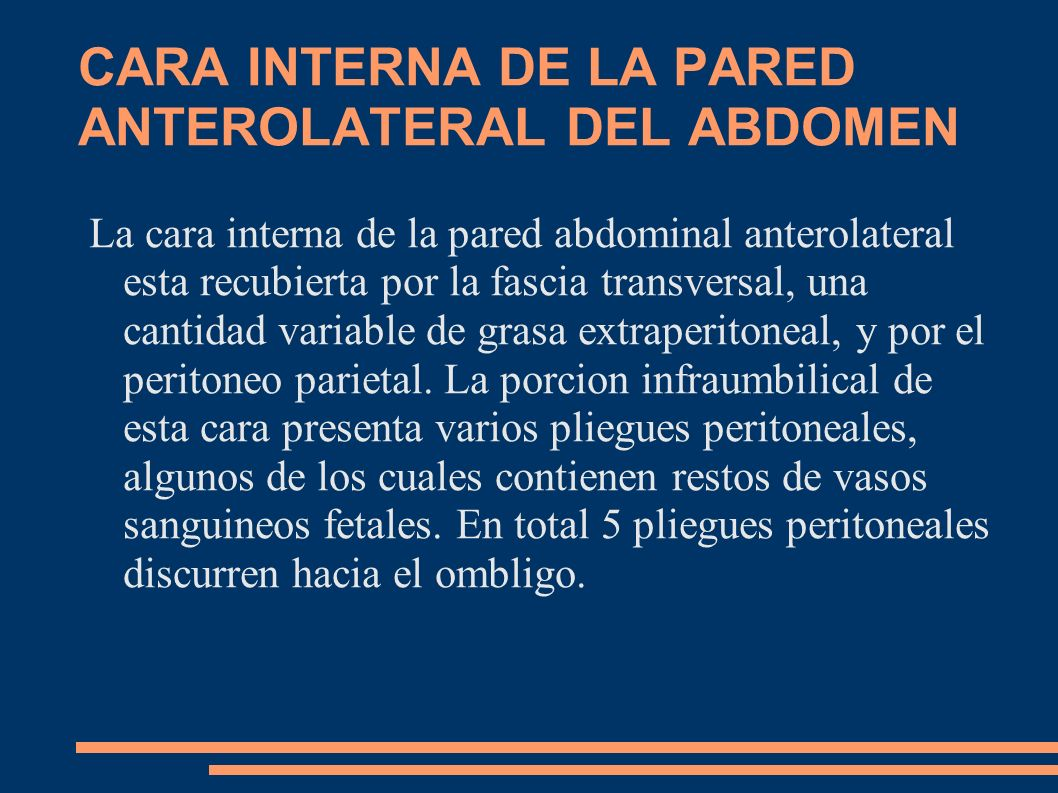 CARA INTERNA DE LA PARED ANTEROLATERAL DEL ABDOMEN
