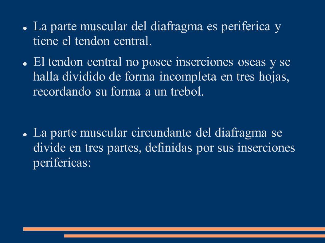 La parte muscular del diafragma es periferica y tiene el tendon central.