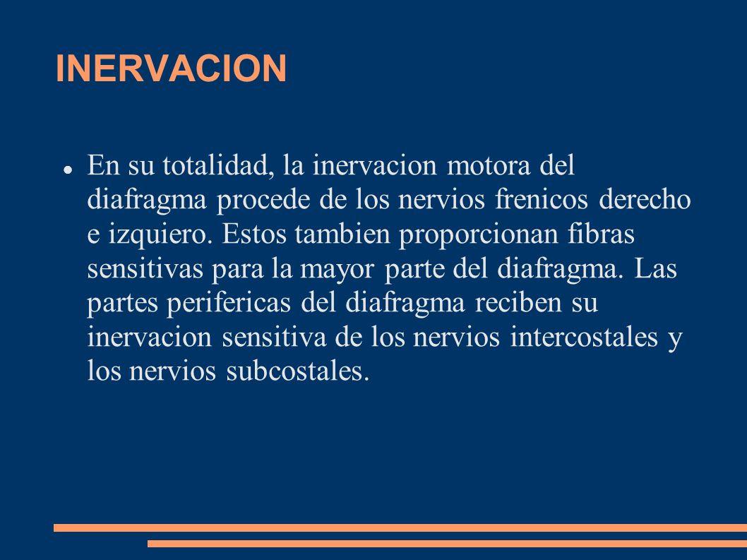 INERVACION