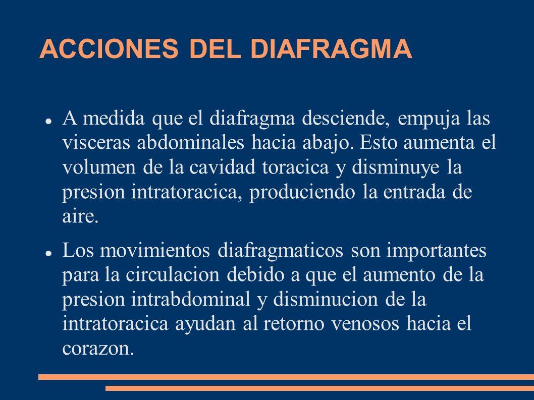 ACCIONES DEL DIAFRAGMA