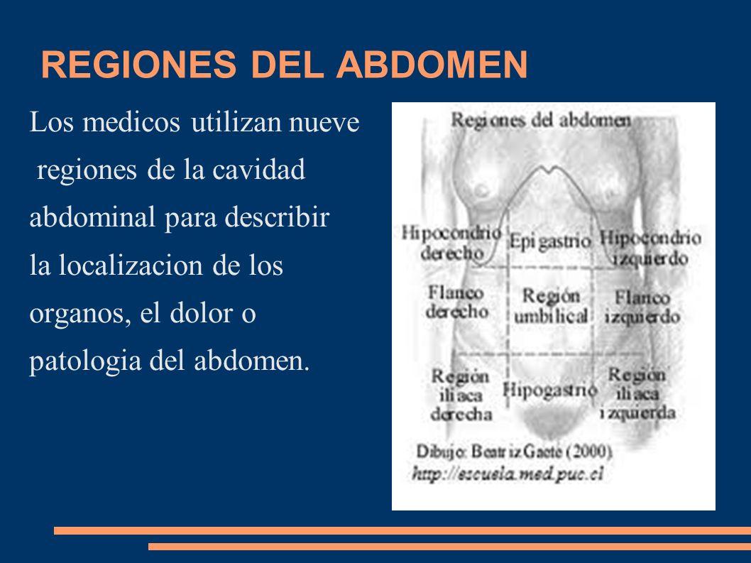 REGIONES DEL ABDOMEN Los medicos utilizan nueve regiones de la cavidad