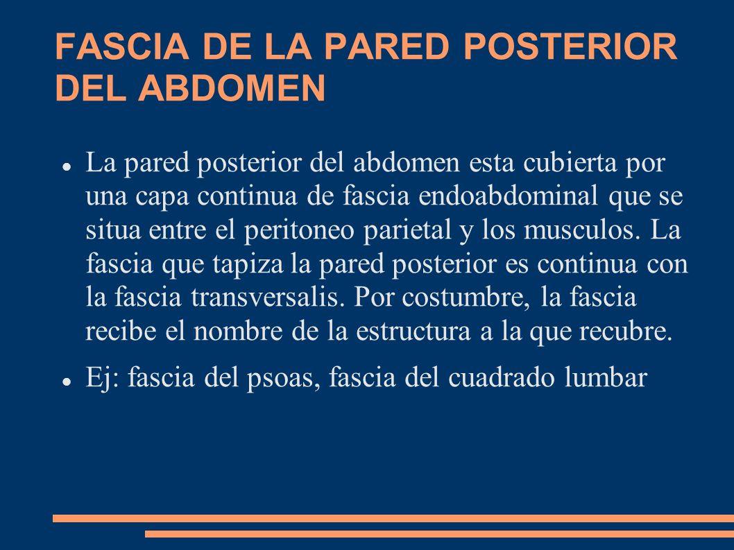 FASCIA DE LA PARED POSTERIOR DEL ABDOMEN