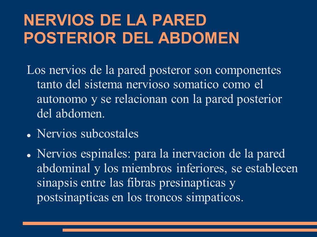 NERVIOS DE LA PARED POSTERIOR DEL ABDOMEN