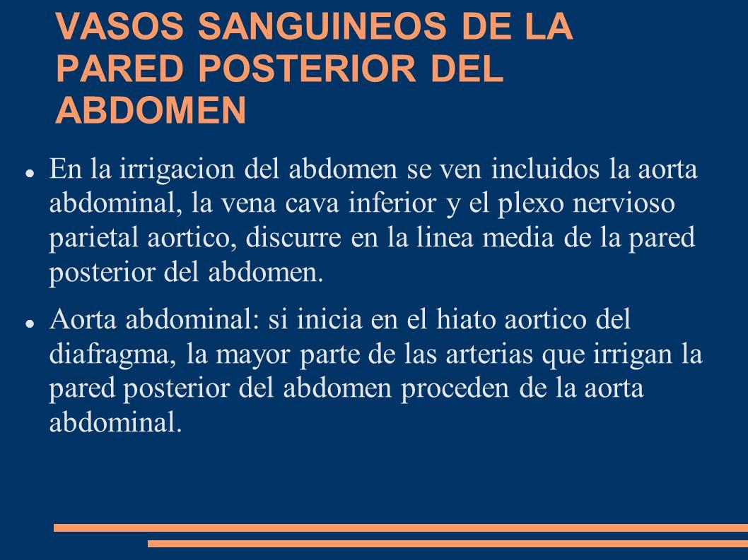 VASOS SANGUINEOS DE LA PARED POSTERIOR DEL ABDOMEN