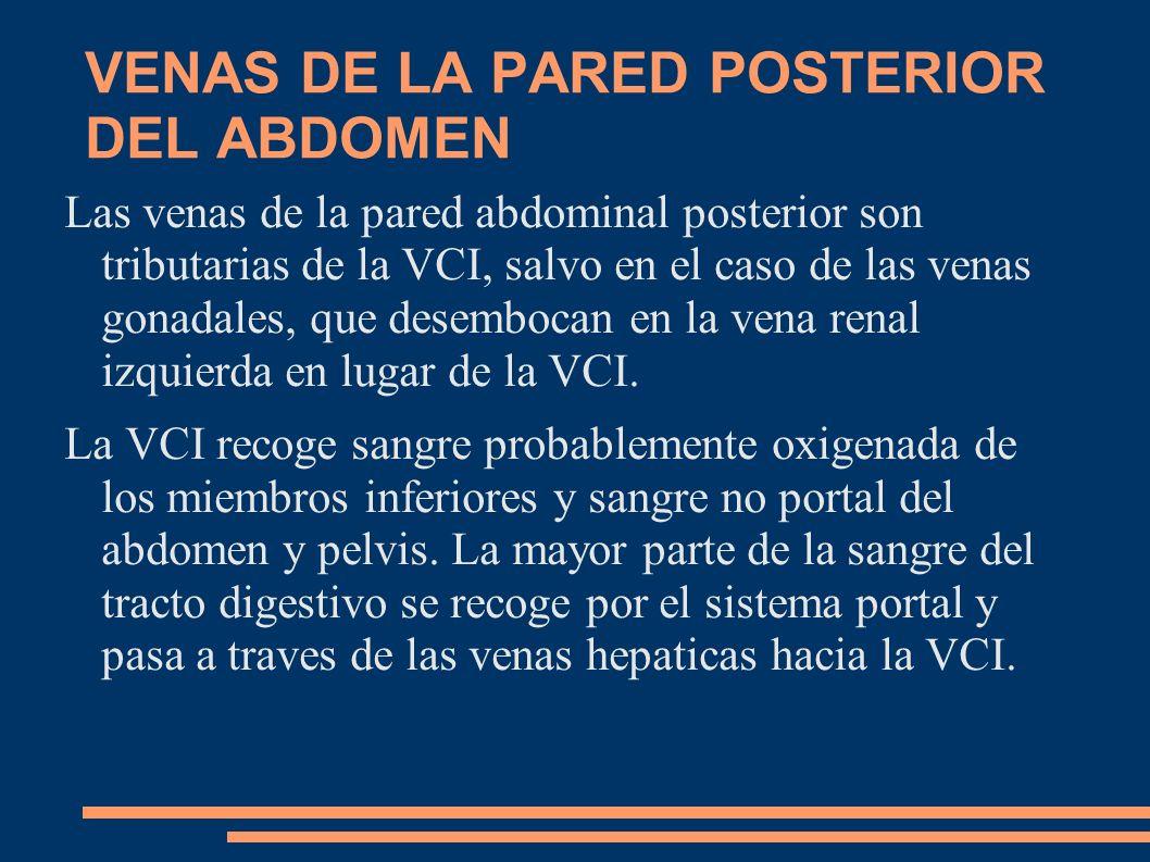 VENAS DE LA PARED POSTERIOR DEL ABDOMEN