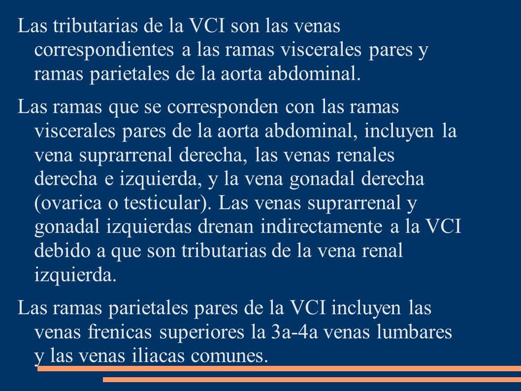 Las tributarias de la VCI son las venas correspondientes a las ramas viscerales pares y ramas parietales de la aorta abdominal.