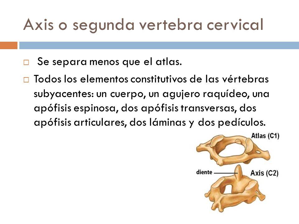 Axis o segunda vertebra cervical