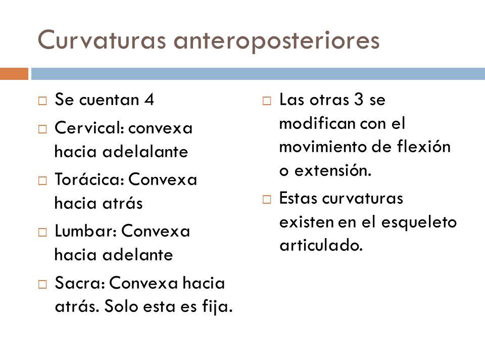 Curvaturas anteroposteriores