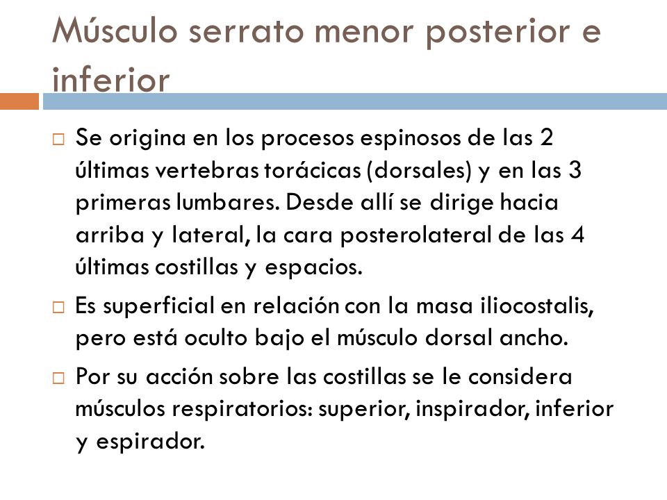 Músculo serrato menor posterior e inferior