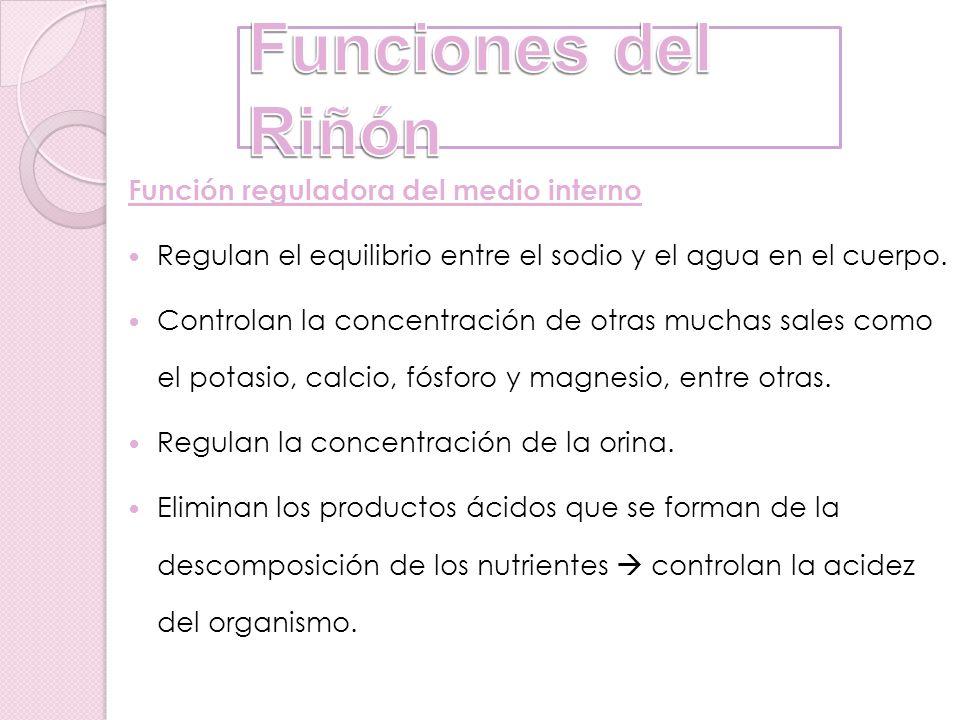 Funciones del Riñón Función reguladora del medio interno