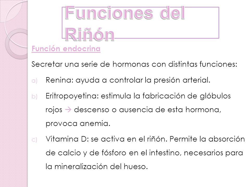 Funciones del Riñón Función endocrina