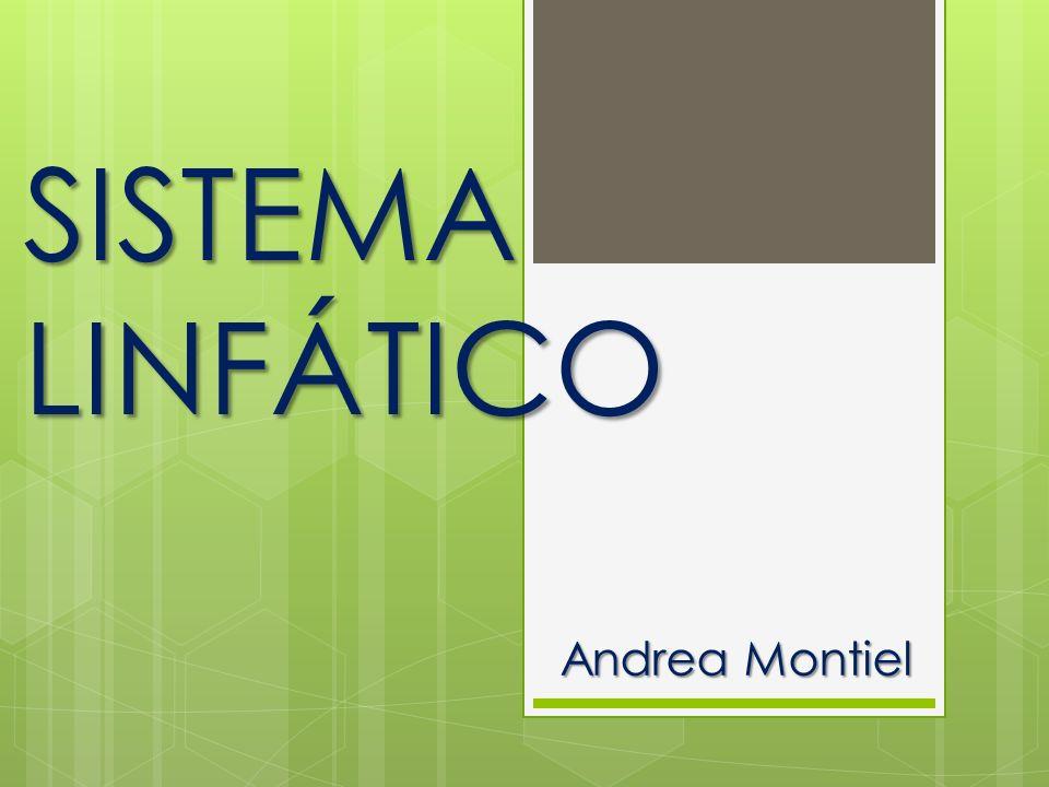 SISTEMA LINFÁTICO Andrea Montiel