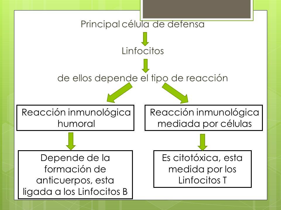 Reacción inmunológica humoral