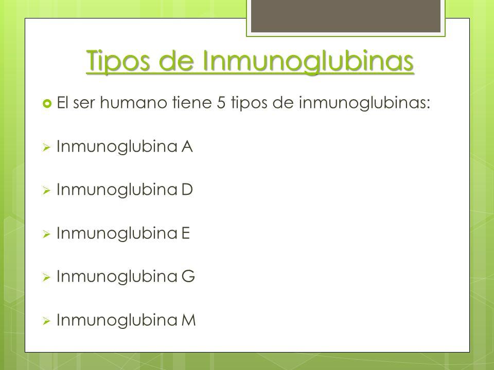 Tipos de Inmunoglubinas